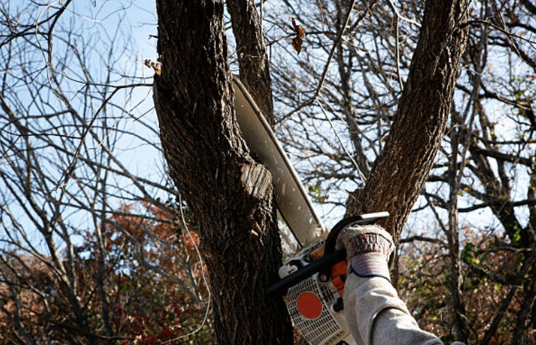 trimming off dead branches in Hoover, AL near Birmingham